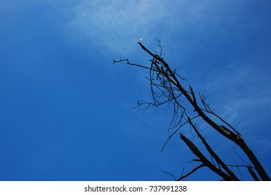 Beautiful sky and branches
