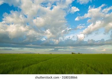 Beautiful sky on the field