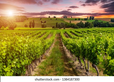 Beautiful sky over vineyards in France