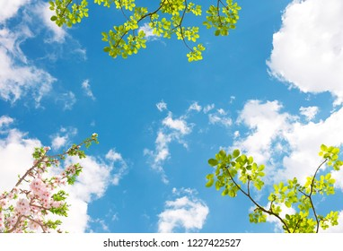 Beautiful sky and spring branches