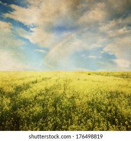 beautiful sky and yellow rapeseed field