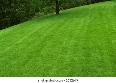 beautiful sloping backyard with vibrant green grass and tree in the background