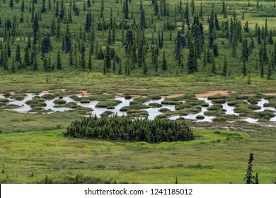 Beautiful slough water pond in the wilderness of Alaska in the boreal forest