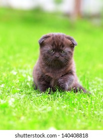 Beautiful small black kitten outdoor summer background