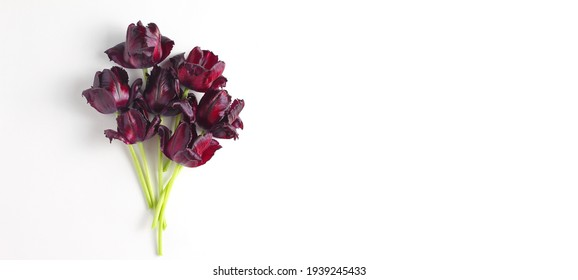 beautiful small bouquet of tulips on a white background. dark red flowers. flat lay, top view, space for a text.