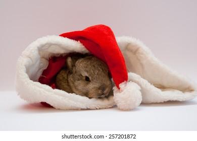 Beautiful small brown rabbit in Santa Claus hat