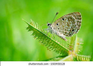 Beautiful small butterflies sitting on a branch of heather In a morning dew. Beautiful butterflies and a drop of dew.