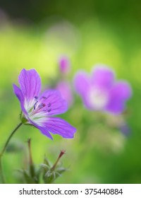 Beautiful small flower close up. Selective focus