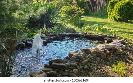 Imágenes, fotos de stock y vectores sobre Small Garden Pond