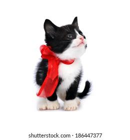 beautiful small kitten isolated on white
