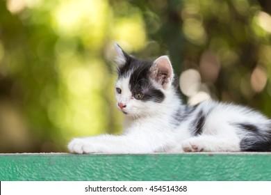 beautiful small kitten on nature