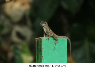 beautiful-small-lizard-gecko-sitting-260