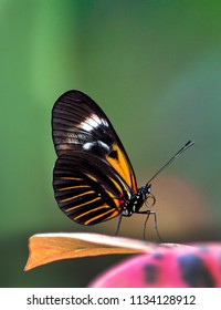 A beautiful small postman butterfly in a pretty garden, lands on a colorful leaf
