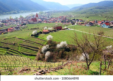 Beautiful small town of Weissenkirchen-in-der-Wachau in spring, surrounded with vineyards. Wachau Valley, district of Krems-Land, Lower Austria.