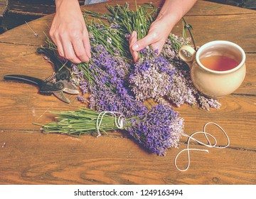 Beautiful smell violet wild Lavender bouquet in the hand, scissors, wooden table. Artist prepare levander stalks.