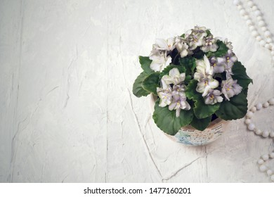 beautiful smoky grey- purple  african violet flower around white background. provence style. close up