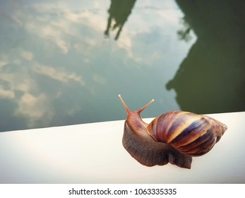 A beautiful snail is crawling slowly on the white metal rail above the river.