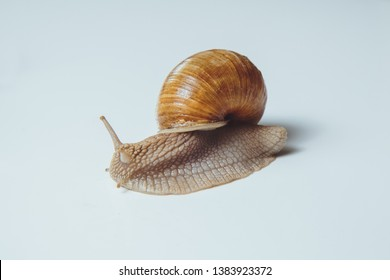 Beautiful snail isolated on white background