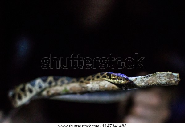 Beautiful snake posing on a branch