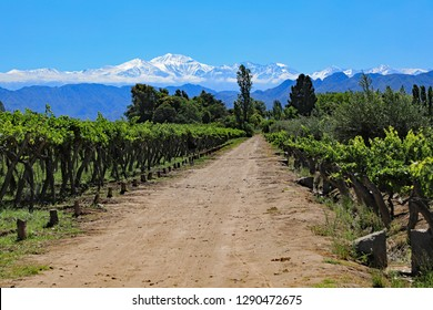 The beautiful snow capped Andes mountains and vineyard growing malbec grapes in the Mendoza wine country of Argentina, South America.