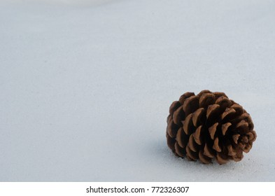 A beautiful snow ground with pinecone
