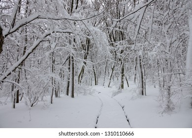Beautiful snow landscape with road in winter forest
