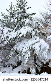 "It is a beautiful snow scene of ""Hallasan Mountain"" in Jeju."