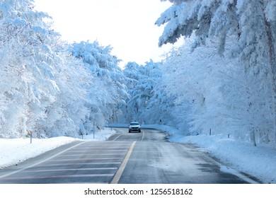"It is a beautiful snow scene on the way to ""Hallasan Mountain"" in Jeju."