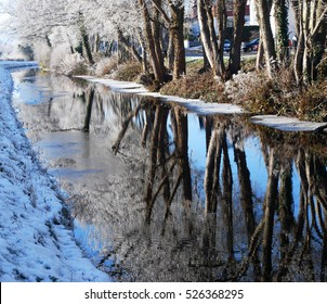 Beautiful Snow Trees Reflection on Roadside