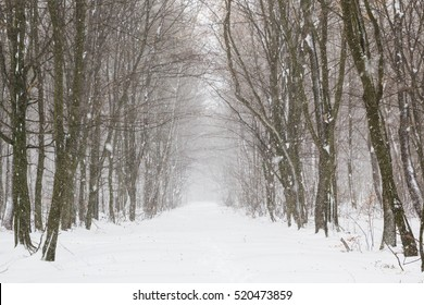 Beautiful snowfall in white forest before Christmas - Shutterstock ID 520473859