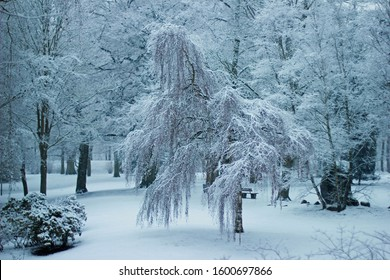 Beautiful snowscape in park of city Moers in Germany in winter with focus on Beautiful snowscape in park of city Moers in Germany in winter with focus on willow