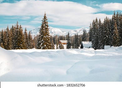 Beautiful snowy landscape on the Pokljuka plateau during the day in the Triglav National Park in Slovenia