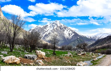 Beautiful snowy mountain and green hills with leafless trees and clear blue sky with whit clouds in background at the day of the spring, Marivan, Kurdistan