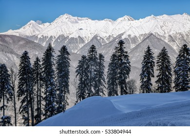 Beautiful snowy mountain peaks and blue sky scenic winter landscape of the Main Caucasus ridge with row of fir trees on the background