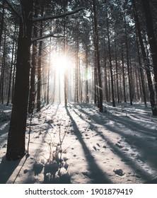 Beautiful snowy winter in Bialowieza Forest