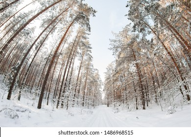 Beautiful snowy winter day in forest