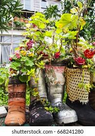 Beautiful socks and shoe flowerpot, colourful flowers
