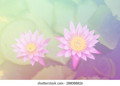 Beautiful soft color pink and blue flowers backgrounds nature - Lotus