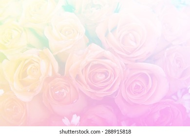 Beautiful soft color pink and yellow flowers backgrounds nature rose