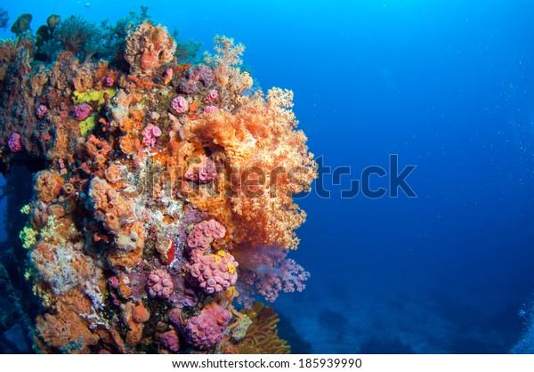 Beautiful soft coral group, Green Island, Taiwan.