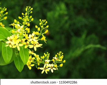 beautiful soft tiny small plant little cute yellow tropical exotic group flowers outdoor under natural sunlight selective focus blur background
