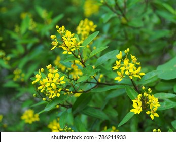 beautiful soft tiny small plant little cute flowers outdoor under natural sunlight selective focus blur background