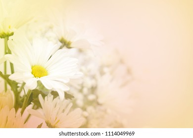 A beautiful soft white daisy flower on a blurred background in peach, yellow and green.  Large text area on the right side.