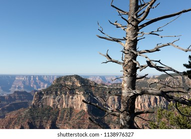 Beautiful South Rim area of Grand Canyon National Park