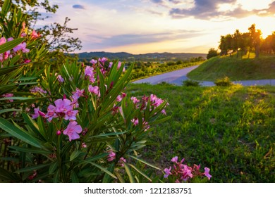 Beautiful southern evening with bright blooming flowers and vineyards. Vibrant sunset in Slovenia