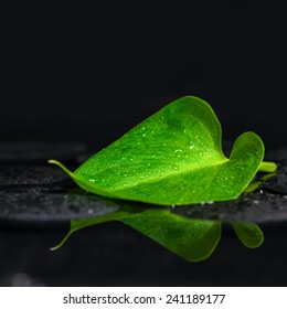 beautiful spa background of green leaf Calla lily on zen basalt stones with drops in reflection water, closeup