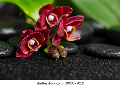 Beautiful spa background of zen massaging stones with drops, red mini orchid (phalaenopsis) and green leaves, close up