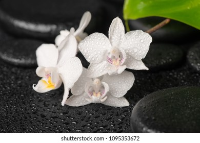 Beautiful spa background of zen massaging stones with drops, white orchid (phalaenopsis) and green leaf