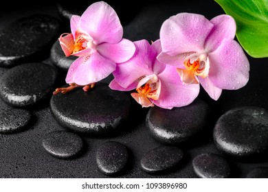 Beautiful spa composition of zen massaging stones with drops, pink orchid (phalaenopsis) and green leaf on black background