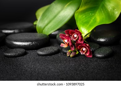 Beautiful spa composition of zen stones with drops, red mini orchid (phalaenopsis) and green leaves
